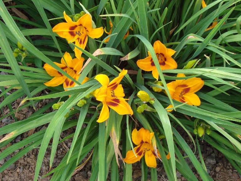 Saratoga Springtime 5-27-14