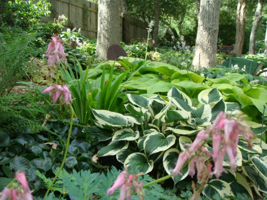 Pessoni garden