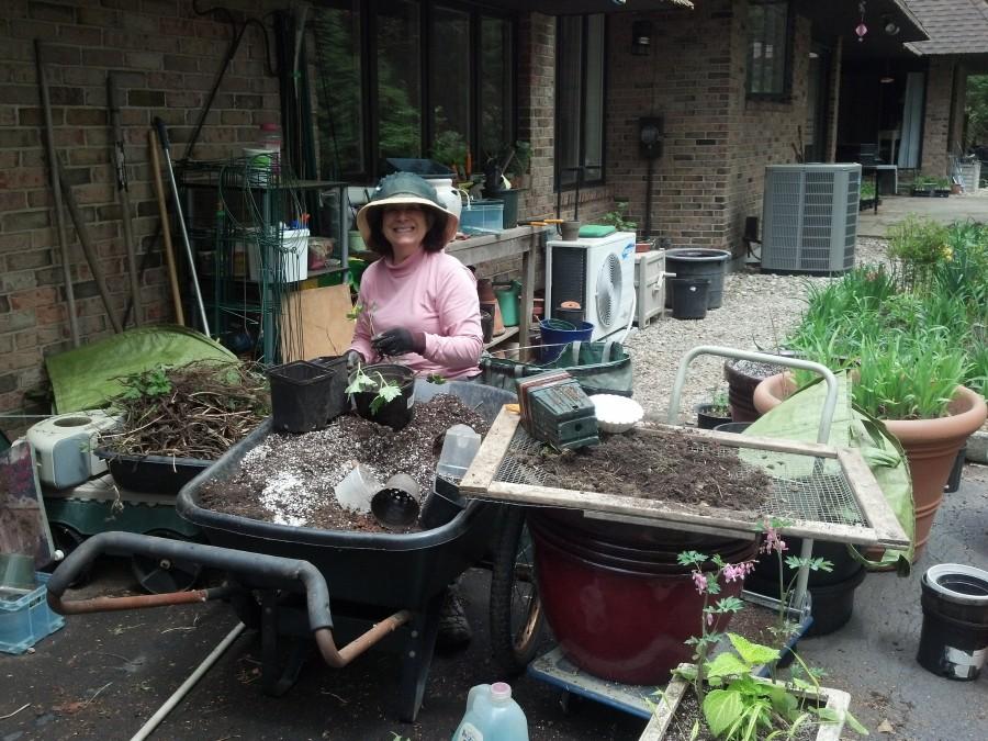 Tina working hard pre-sale.