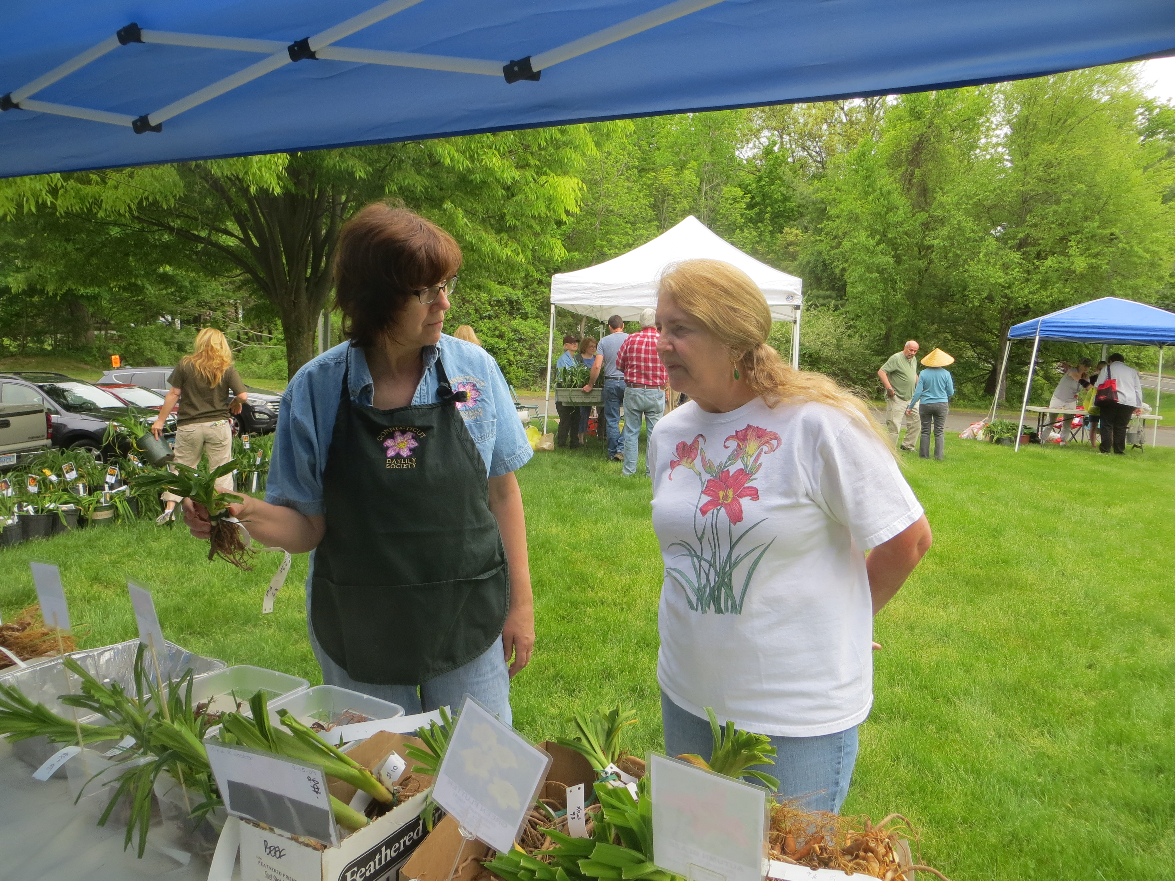 Plant Sale – Connecticut Daylily Society