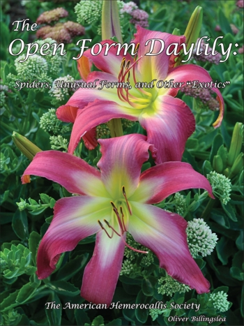 the-open-form-daylily