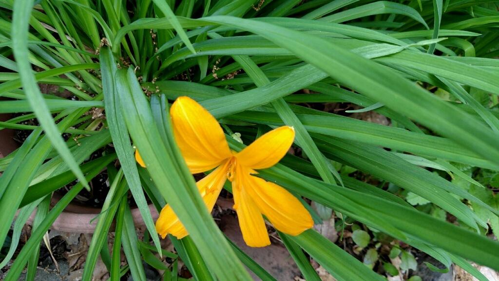 Rebecca\'s Spring Garden – Connecticut Daylily Society